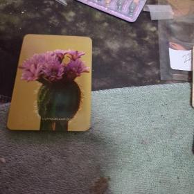 年历片-1974年:   花卉、 ( 单枚)  【沂蒙红色文献个人收藏展品】 235