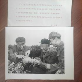 1982年,黑龙江安达县万宝山公社,东北农学院教授董一忱、农艺师唐述宏、申勤诚进行甜菜调查