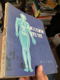 人体X线解剖图谱