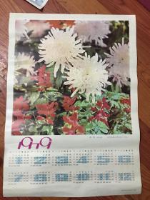 1979年年历画秋菊