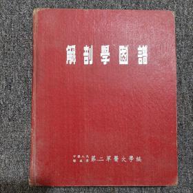 解剖学图谱。1953年版。