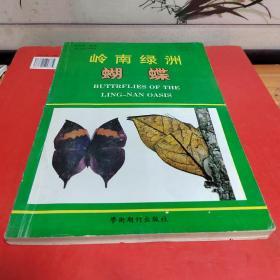 岭南绿洲蝴蝶