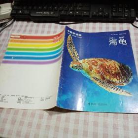小聪仔·自然:海龟