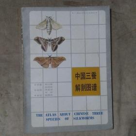 中国三蚕解剖图谱