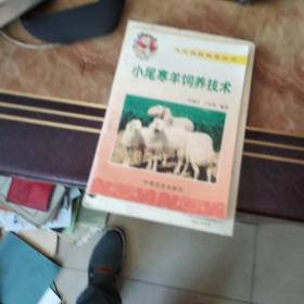 小尾寒羊饲养技术
