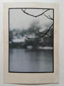 现代艺术摄影原照之七:春雨梅先知