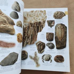 The Natural History Book:The Ultimate Visual Guide to Everything on Earth 自然历史书:地球上一切事物的终极视觉指南(英文原版 精装)