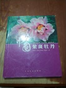 中国紫斑牡丹