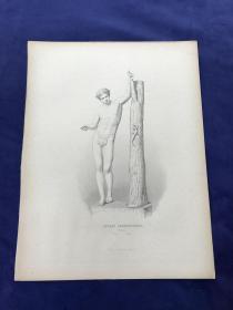 《古罗马雕塑:阿波罗与蜥蜴》—19世纪点刻钢版画 纸张尺寸32.2*24.5厘米