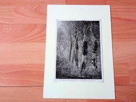 19世纪木刻版画《风景画:落基山脉的秋日白杨林》(Study of the Rocky mountain Aspens)-- 出自19世纪美国画家,沃辛顿·惠特里奇(Worthington Whittredge,1820–1910)的绘画作品 -- 选自当年艺术日志 -- 后附卡纸30*21厘米,版画纸张19.5*14.5厘米