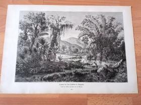 1884年大幅木刻版画《风景画:安第斯山脉的丛林秘境》(Scenerie bei San Cristobal in Venezuela)-- 出自19世纪德国画家、版画家,A.Goring的原创木刻作品 -- 版画纸张41.5*27厘米
