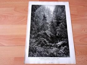 """1884年大幅木刻版画《风景画:易北河砂岩山脉的""""狼谷""""森林,萨克森瑞士》(Die Wolfsschlucht im Amselgrund in der Sachsischen Schweiz)-- 萨克森瑞士是易北河的砂岩山脉地区,位于德国和捷克交界处。那个地区奇异的岩层和峡谷塑造了当地独特的美学,拥有独一无二的白垩砂岩岩石景观、幽深的山谷和峡谷 -- 版画纸张41.5*28厘米"""