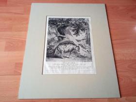 1744年巨幅铜版蚀刻《印第安土狼》(Indianischer Wolff)-- 出自18世纪德国著名动物画家、雕刻师,约翰·埃利亚斯·里丁格(Johann Elias Ridinger,1695–1767)的铜版雕刻系列作品《动物科普图谱》-- 卡纸画框60*50厘米,版画纸张51*36厘米