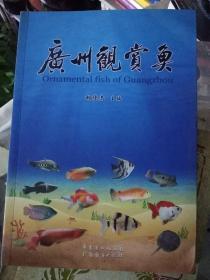 广州观赏鱼