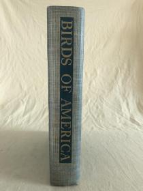 美洲鸟谱  Birds of America  1936年布面精装大开本,全铜版纸印刷,大量手绘插图