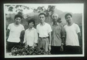 黑白老照片:茶叶专家在绍兴茶园(右二为金国法)