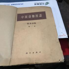 中国动物图谱 软体动物第一册