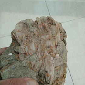 瀑布状白晶木化石,爬山偶遇,可惜木石粘一块了,形一般