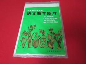 学生挂图 五年制小学课本  语文教学图片 第五册  2【存3张】