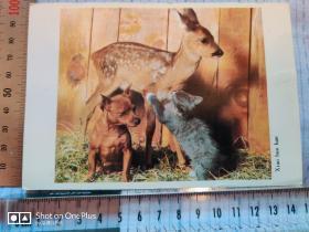 明信片:(动物)小伙伴 1张