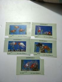金鱼邮票收藏纪念(5枚合售)