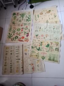 民国自然科学知识挂图(二)【植物组】4张