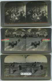 清末民国时期立体照片----民国农业立体照片三张,养蚕,耕地,收获时候打包大米