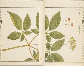 【复印件】江户晚期绘本:本草图谱,岩崎常正编著,共存92卷,收录植物近1900种,被认为是日本首部全面介绍药用植物的图集。本店此处销售的为该版本的仿古道林纸无线胶装彩色高清。