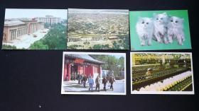 出售盖有1981年中国邮票发行哈尔滨纪念邮戳风光明信片一套5张年代久保存完好