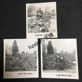 【系列照片】早期1960年河南洛阳王城公园牡丹园家人游玩留影3张合售,该公园始建于1955年坐落在东周王城遗址上。老照片影像清晰,颇为难得