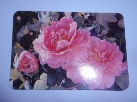 1977年年历片【牡丹花】 B14