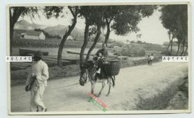 民国时期山东威海卫通往城外的一条主路,有一男子牵着驴车,拉着媳妇孩子回家民俗老照片