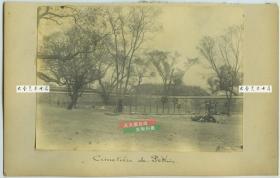 清代1901年庚子事变八国联军侵占领北京时期,使馆区后院中的联军士兵墓地。16.8X11.3厘米,泛银