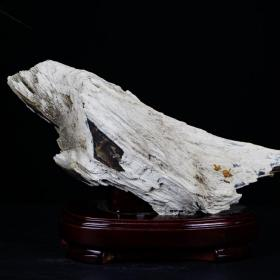 """纯天然木化石,极品特色木化石,孤品""""展翅高飞""""木化石,极为罕见的稀有""""雄鹰""""木化石,""""白色雄鹰""""色彩独特,形状独特,玉化良好,极为稀有,收藏佳品,可遇不可求。"""