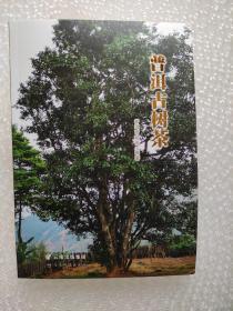 普洱古茶树