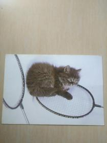 明信片 猫1张带邮票