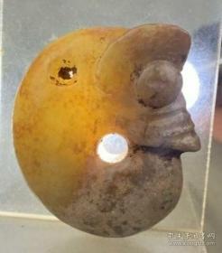 文化玉猪龙