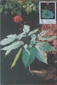 T30(5-1)药用植物 人参 极限片 极限明信片 销1997.5.9风景戳 少见