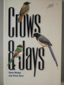 Crows & Jays 【birds, 鸟类】