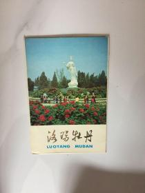 明信片-- 洛阳牡丹   4枚 附带封套