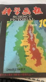 科学画报1989 10