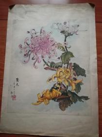手绘彩色工笔菊花图:菊花