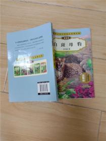 动物小说大王沈石溪精品集 白斑母豹 拼音版 【书脊受损】
