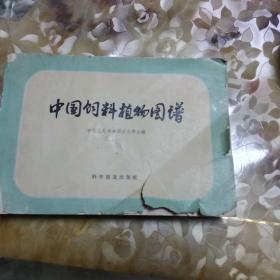 中国饲料植物图谱
