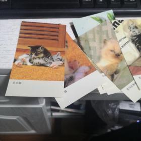 卡片:猫《10张合售》日本猫、混血猫、波斯猫、喜马拉雅猫、美洲短毛猫   品如图   编号 分1号册
