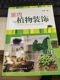 室内植物装饰