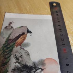 孔雀(刘奎龄作)