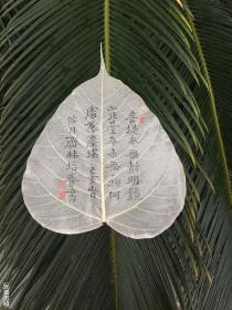 林培养—菩提叶书法小品