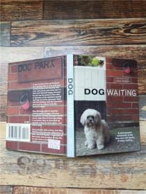Dog Waiting By Lisa Vandy【精装】