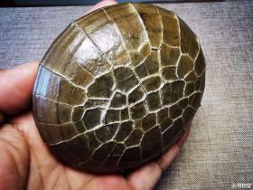 """纯天然顶级奇石""""神龟"""",象形奇石""""网""""神奇的象形奇石""""龟甲骨文"""",大自然的鬼斧神工,极品龟纹石,可遇不可求,温润细腻,值得永久收藏"""